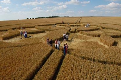 circulo de trigo