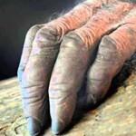 mitos de terror la mano peluda ver online